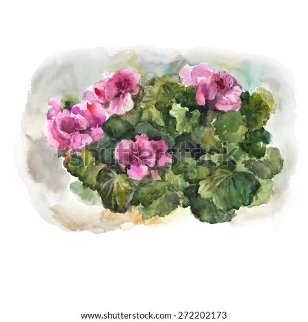 Watercolor geranium on brown background. Vector illustration. - stock vector