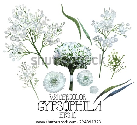 Watercolor gypsophila set. Vector design element isolated on white background - stock vector