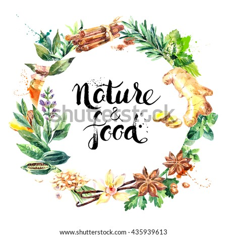 Watercolor hand drawn natural fresh herbs and spices on white background. Eco food organic cafe menu design - stock vector