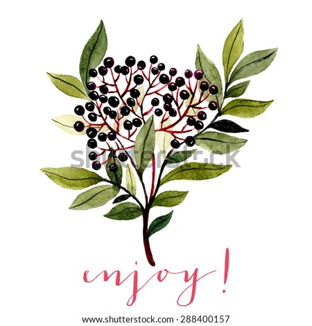 watercolor illustration of branch with leaves and dark blue berries. botanical watercolor illustration. can be used for greeting cards, wedding invitations etc - stock vector