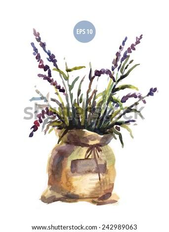 watercolor lavender in bag, painting flower - stock vector