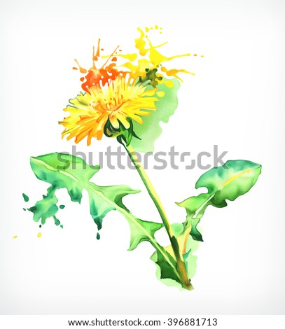 Watercolor painting, dandelion, vector illustration, isolated on a white background - stock vector