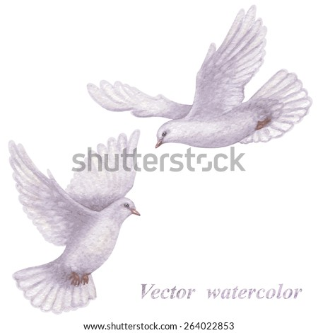 Watercolor pair of flying doves isolated on white background. - stock vector