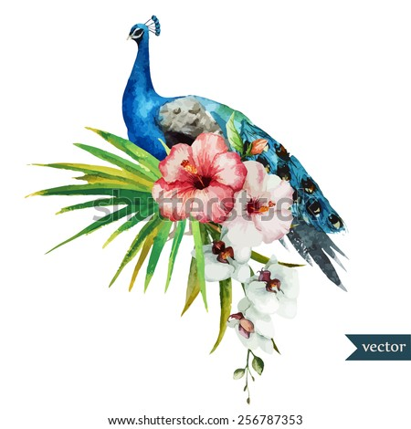 watercolor, peacock, flowers, element, poultry, - stock vector