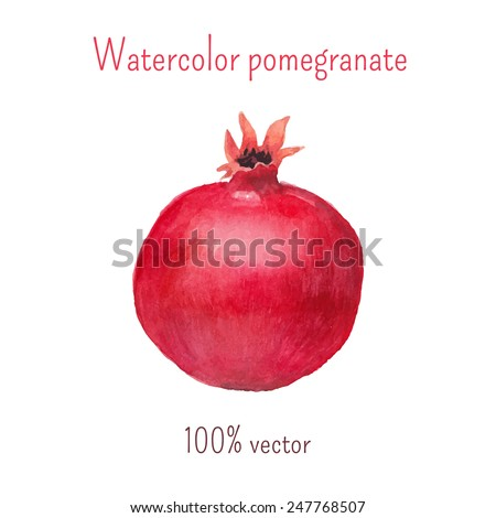Watercolor pomegranate artwork. Vector hand drawn fruit illustration. Isolated on white background - stock vector