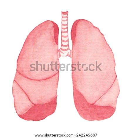 Watercolor realistic human lungs on the white background, aquarelle.  Vector illustration. Hand-drawn decorative element useful for invitations, scrapbooking, design. - stock vector