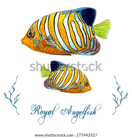 Watercolor Royal Angelfish isolated on white background. Tropical fish card, postcard, invitation. Elegant concept for Aquarium, Swimming Lessons, Diving courses, Eco Tourism. Element for your design. - stock vector