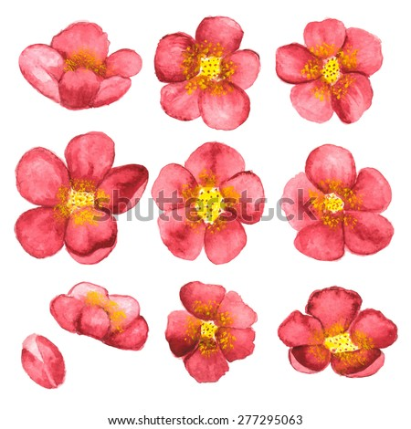 Watercolor sketch blossom sakura, cherry tree flowers set closeup isolated on white background. Hand painting on paper - stock vector