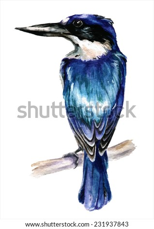Watercolor style vector illustration of kingfisher bird - stock vector