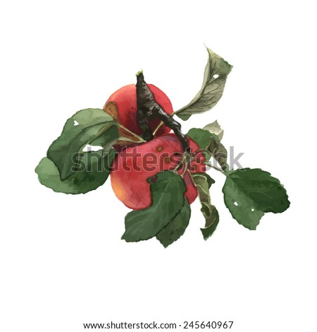 Watercolor sweet red apples set with branch and leaves, traced - stock vector
