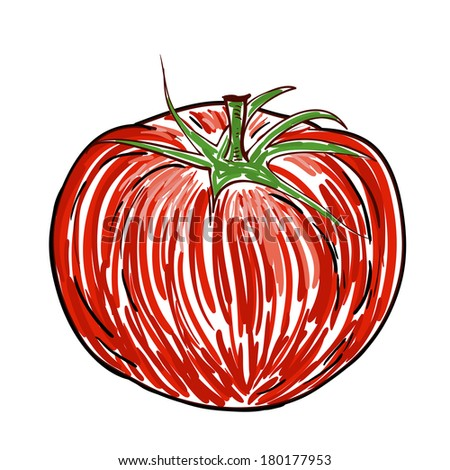 Watercolor Tomato isolated on white - stock vector