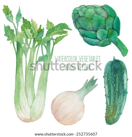 Watercolor vegetables set. Hand painted vegetables isolated on white background: cucumber,onion, celery, artichoke. Healthy diet food elements in vector. Vegetarian collection - stock vector