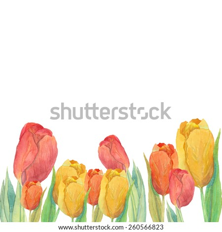 Watercolor yellow and red tulips frame. Isolated natural design on white background. Hand painted spring flowers border card. Artistic vector illustration - stock vector