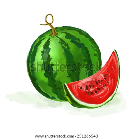 watermelon vector illustration  hand drawn  painted watercolor  - stock vector