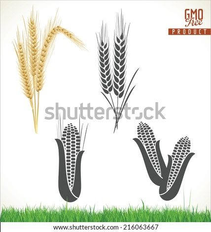 Wheat and corn  - stock vector