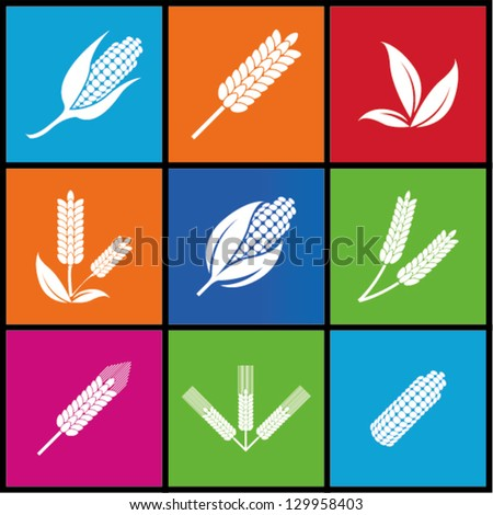 Wheat and rye. Elements for design. Icon set. - stock vector