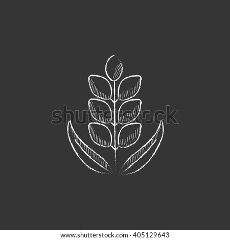 Wheat. Drawn in chalk icon. - stock vector