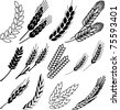 Wheat ears collection - stock vector