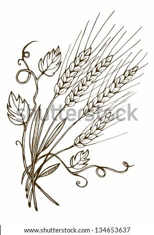 Wheat hand drawn - stock vector