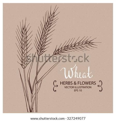 Wheat, Hand drawn Vector Illustration - stock vector