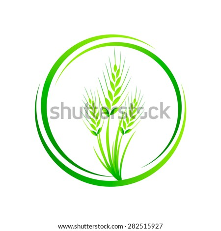 Wheat in a circle, wheat grass green juice. Logo, banner, frame for business, the store site for clean super food on a white background. Vector illustration - stock vector