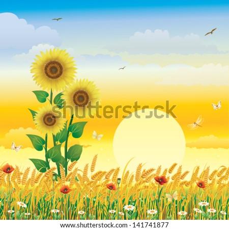 Wheat landscape - stock vector