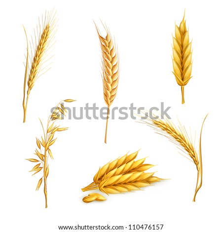 Wheat Stock Photos, Images, & Pictures | Shutterstock