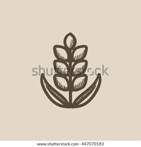 Wheat vector sketch icon isolated on background. Hand drawn Wheat icon. Wheat sketch icon for infographic, website or app. - stock vector