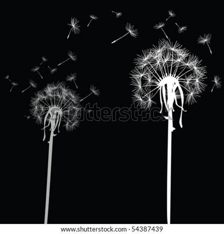 White dandelions on black background - stock vector