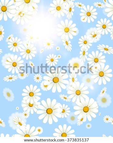 White falling daisy flower spring or summer background with sun beam light. Flying chamomile vector floral blue backdrop - stock vector