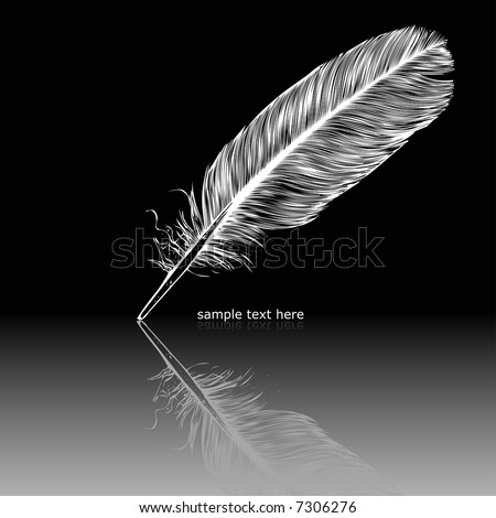 White feather on black surface. Quill pen, calligraphy.  - stock vector