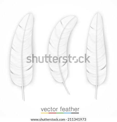 White feather on white background set. Vector illustration - stock vector