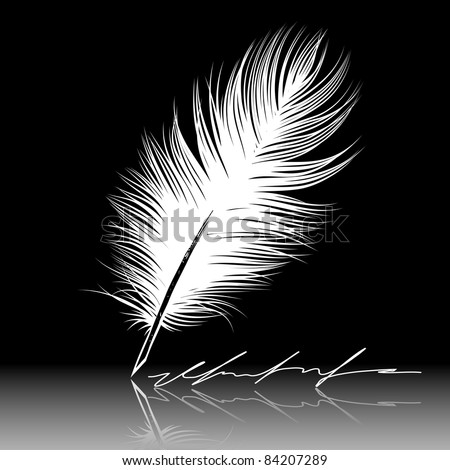 White feather pen drawing, quill, calligraphy tool. - stock vector
