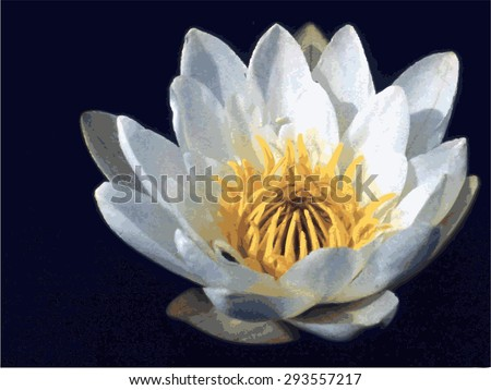 White river Lily on dark background. - stock vector