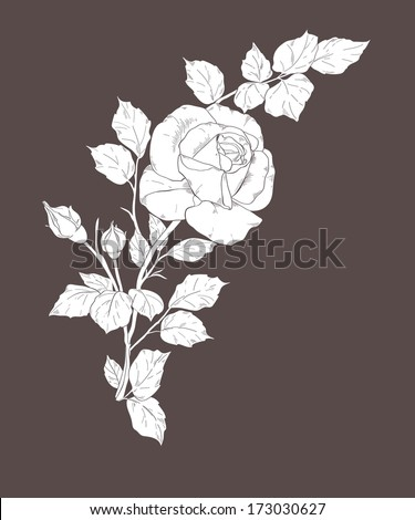 white rose on dark - stock vector