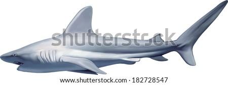 White Shark isolated on white background. Vector illustration - stock vector