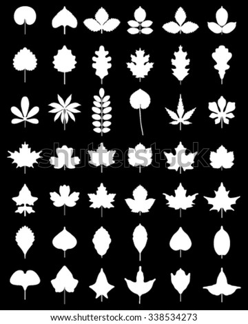 White silhouettes of leaves of trees, vector - stock vector