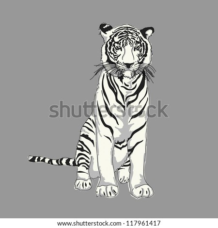 White Tiger Drawing - stock vector