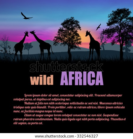 Wild Africa poster. Giraffes silhouettes on sunset with space for your text, vector illustration - stock vector