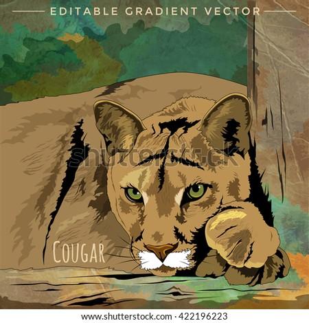 Wild Cats. Cougar - stock vector