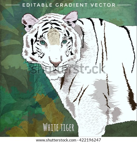Wild Cats. White Tiger - stock vector