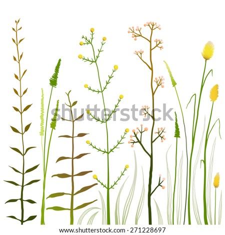 Wild Field Flowers and Grass on White Collection. Rustic colorful meadow growth illustration set. Vector EPS10. - stock vector