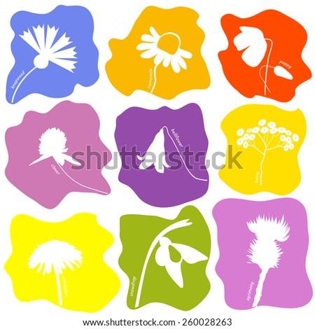 Wild flowers icons set. Vector illustration. - stock vector