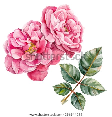 Wild rose. Watercolor, hand painted, isolated on white background. Vector illustration - stock vector