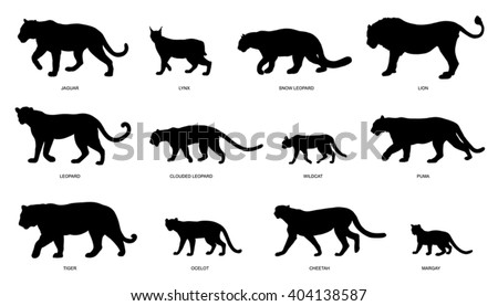 wildcats silhouettes on the white background - stock vector