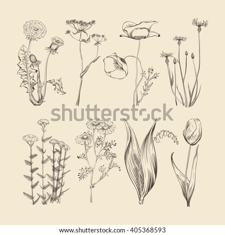 Wildflowers, herbs and flowers. Spring and summer botanical vector collection. Flower spring, herb and flower nature, botanical hand drawing herbal and flower illustration - stock vector