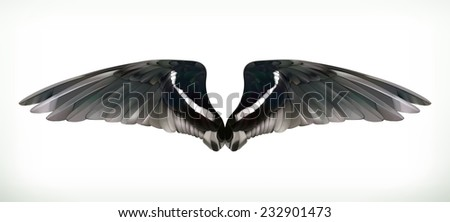 Wings vector illustration - stock vector