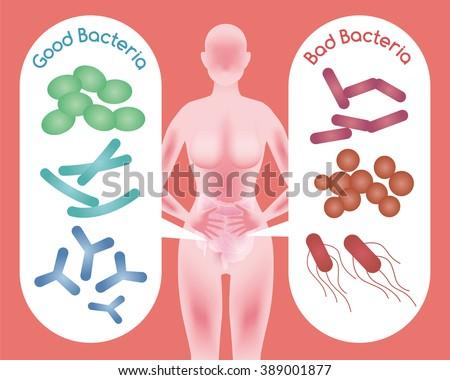 Woman silhouette and Good Bacteria and Bad Bacteria, enteric bacteria, Intestinal flora, Gut flora, probiotics, image illustration - stock vector