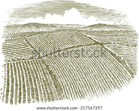 Woodcut-style illustration of an aerial view of farm fields. - stock vector