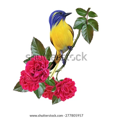 yellow bird on a branch of a red rose - stock vector